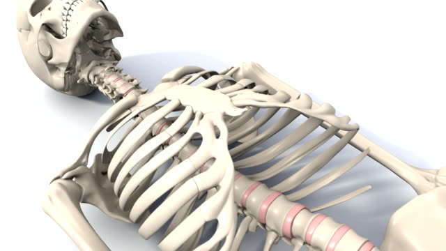 skeleton lying down animation stock footage video | getty images, Skeleton