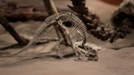 A skeleton of dinosaurs in a prehistoric setting