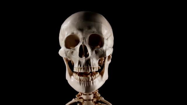 Skeleton talking