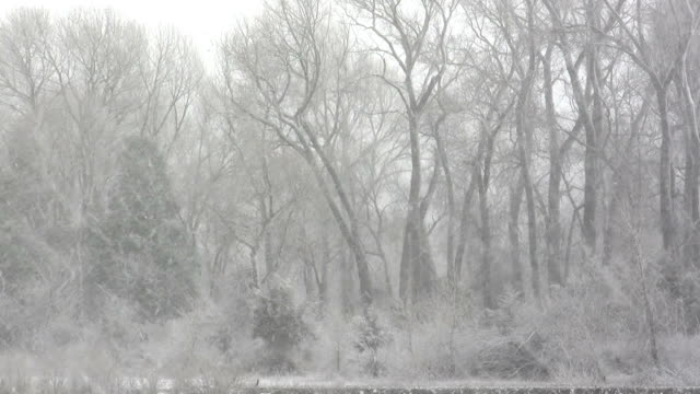 Skeleton Trees in Blizzard