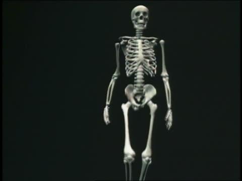 CGI skeleton walking towards + past camera with black background