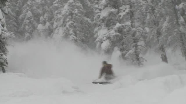 TS skier kicks up powder in trees / revelstoke, british columbia, canada