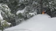 MS PAN TU TD POV Skier skiing through trees / Squamish, BC, Canada