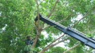 Skilled man cutting big tree , engine crane