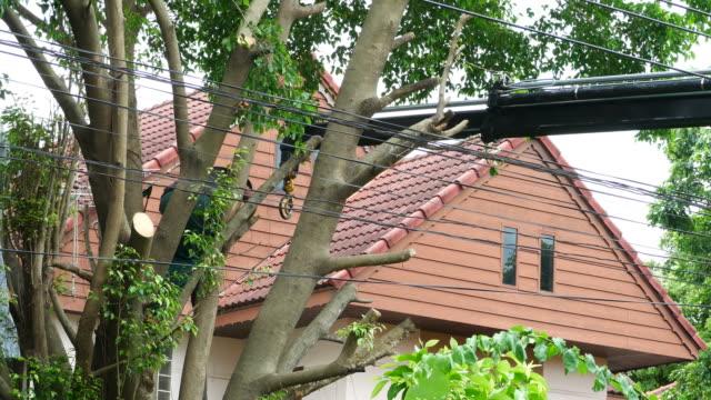 Skilled man cutting big tree , engine crane