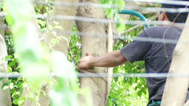 Skilled man cutting big tree
