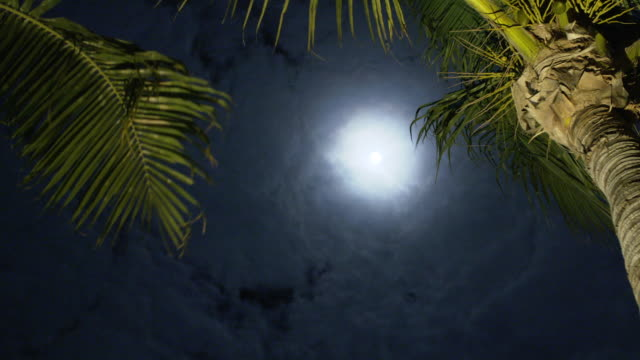 Sky in the Night on the Bahamas