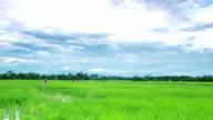 Himmel bewegen über Reisfeld mit Zeitraffer Vogelscheuche