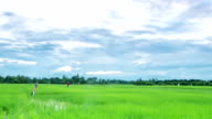sky moving over paddy field with scarecrow ,time lapse