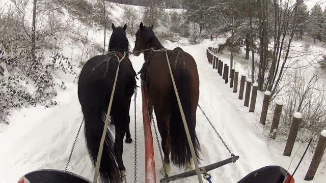 Sleds and horses