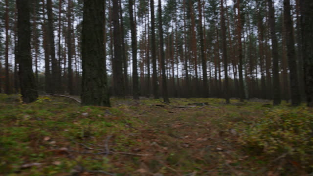 Slider shot in the forest.