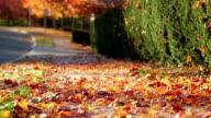 Sliding shot of leaves landing on sidewalk