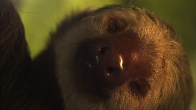A sloth blinks.