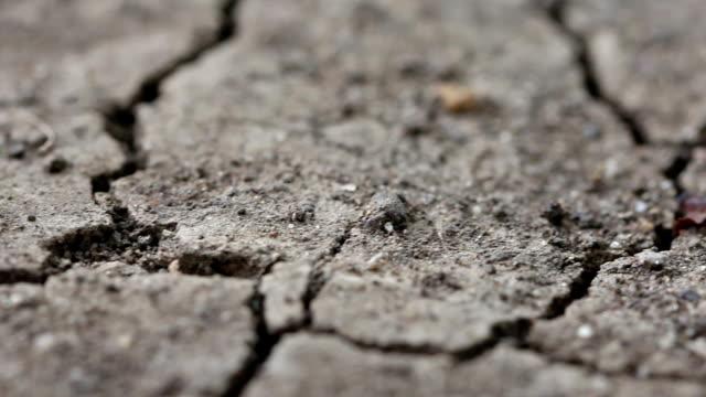 Langsam dolly Makro Rissige Erde