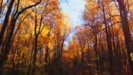 Slow drive through fall trees, Virginia