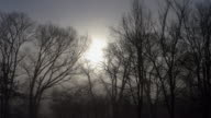Slow Mo Dolly Shot of Dense Foggy Morning Traffic at Sunrise
