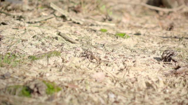 Zeitlupe : Ameisen