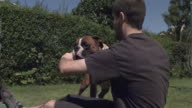 Slow motion Boxer dog (Canis lupus familiaris) and man play fight in garden, UK