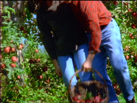slow motion couple with arms around each other holding basket of apples + walking thru orchard towards cam
