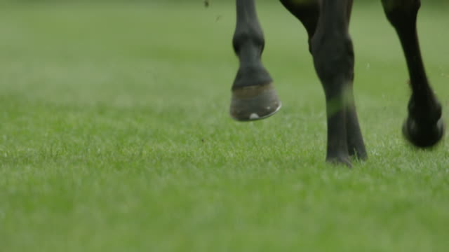 Slow motion Gallop Horse Race, hooves close up