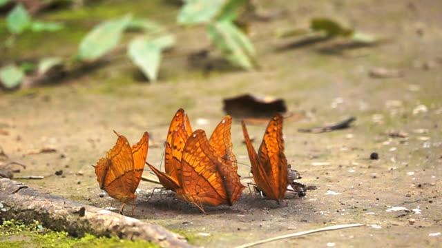Slow-Motion HD: Schmetterling im Wald.