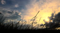 Slow Motion HD: grass with cloud sunset
