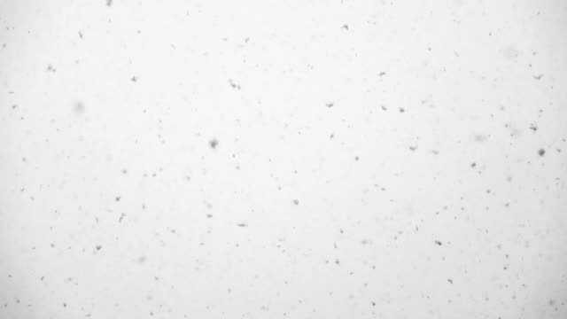 Slow Motion HD - Snow falling on white backround