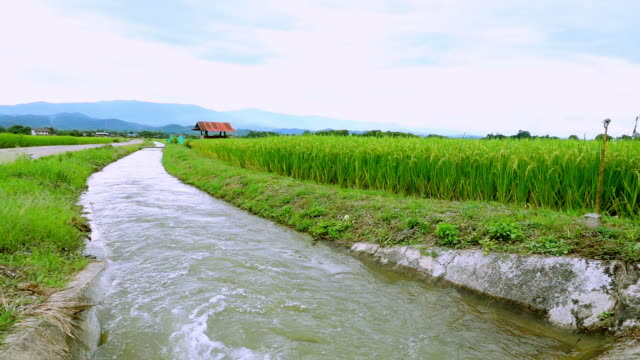 Slow Motion: Image of beautiful Terraced rice field in water season and Irrigation ,rices paddy field