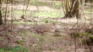 Slow motion: Jumping and runing Squirrel