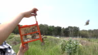 Lento Movimento : Che l'uccello in gabbia per la libertà