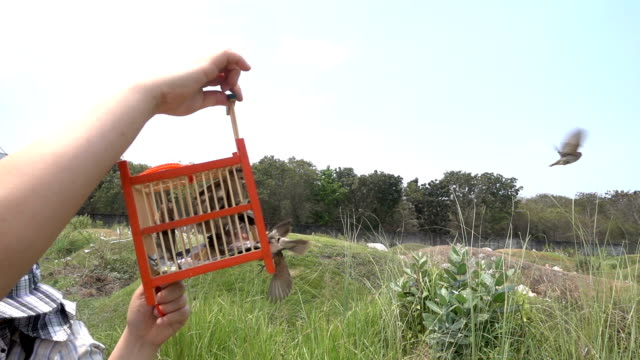 Slow Motion: Let The Bird Out Of The Cage To Freedom