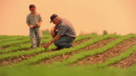 Slow motion low angle wide shot male farmer and boy with baseball mitt walking in cultivated field / man kneels / Iowa