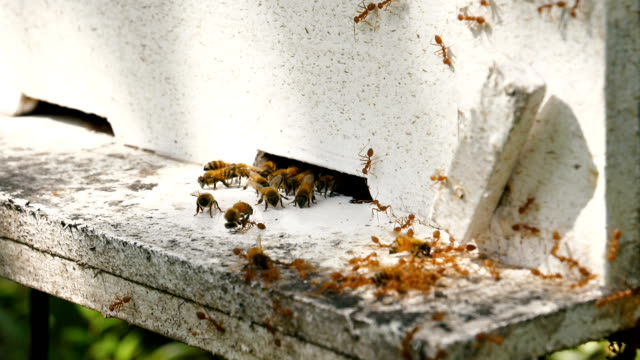 Slow Motion: Många bin nära en hänrycka till kupan