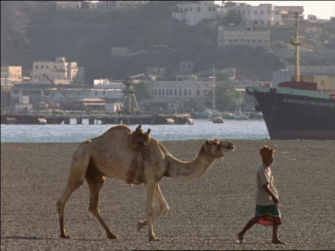 slow motion PAN Middle Eastern man leading camel in desert with ship passing in harbor in background / Aden, Yemen