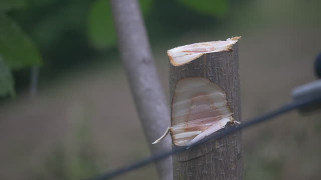 Slow motion of cutting tree trunk