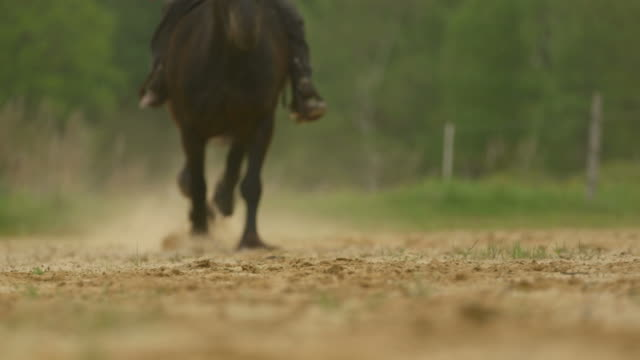 Slow motion of horse galloping hooves passing camera with sound