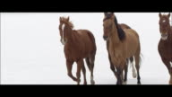 Slow motion of horses running.
