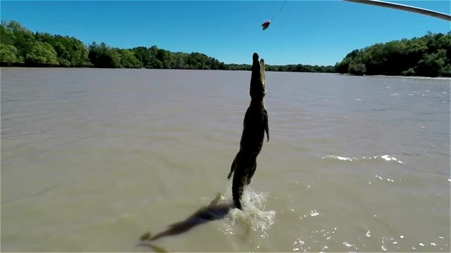 Slow motion of jumping crocodile