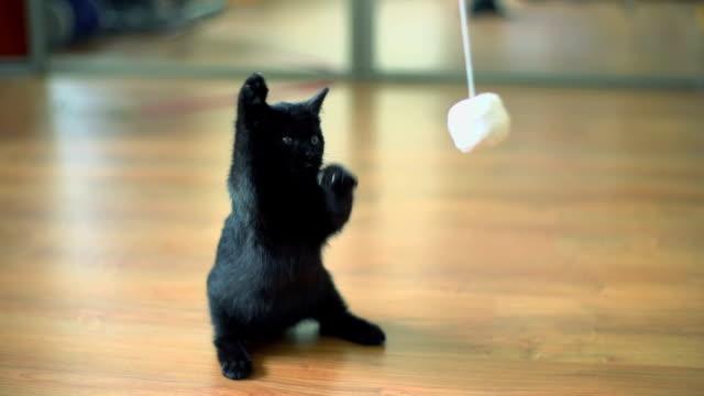 Zeitlupe von Kätzchen spielen.