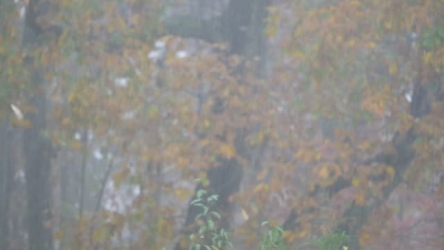 Slow motion of rain shower and leaves falling in Autumn