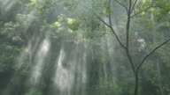 Slow motion of Sunlight through trees with spray.