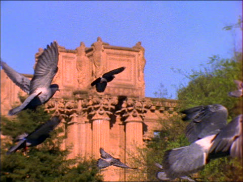 slow motion pigeons flying past Palace of Fine Arts, San Francisco