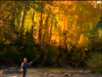 slow motion tilt down from Autumn trees to man fly fishing in river / Colorado