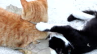 Slow motion: Two cats playing