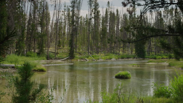 Slow Motion wide shot of lake in forest / Redfish Lake, Idaho, United States
