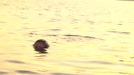Slow Motion Woman in Water