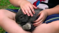 Slow motion:Baby stroke Rabbit