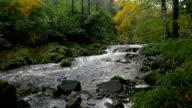 Zeitlupe stream im Wald