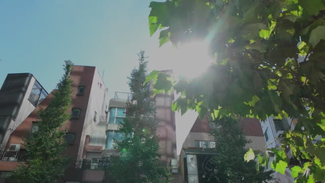 Slow motion,Sun light and tree in Harajuku.Tokyo,Japan.