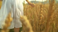 HD Slow motion:Woman in summer sunset at wheat field.